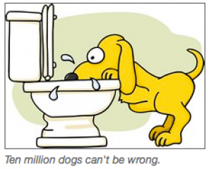 dog-drinking-from-toilet_sm2